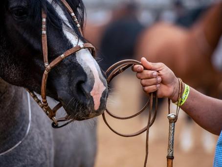 Segunda prévia morfológica do Cavalo Crioulo ocorre nesta semana