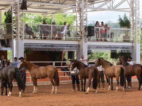 Cresce o número de adeptos ao cavalo Crioulo no Rio de Janeiro