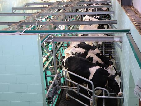 Preço do leite pago ao produtor deve recuar nos próximos meses