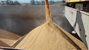 Confirmada negociação de 50 mil toneladas de arroz com casca para o exterior