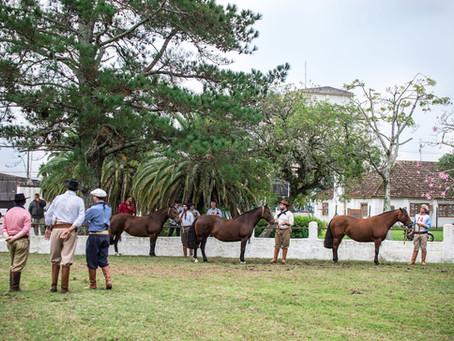 Pelotas abre ciclo de Exposições Passaportes da raça Crioula