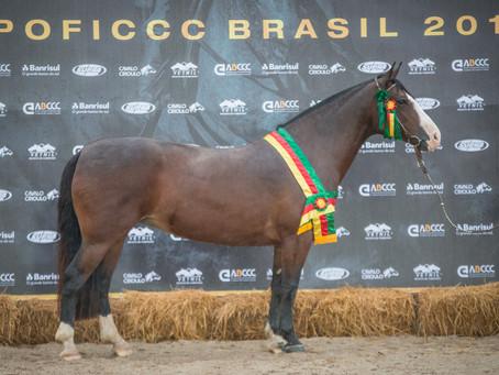 Égua de Bagé é o Melhor Exemplar da Raça na ExpoFICCC 2018