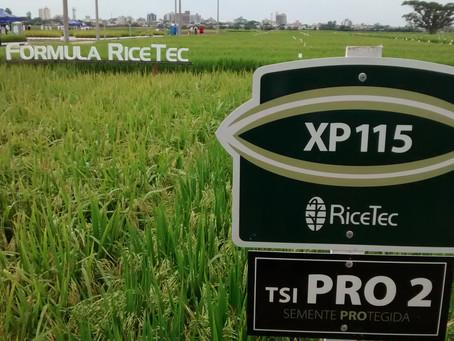 RiceTec oferece benefícios na compra antecipada de sementes