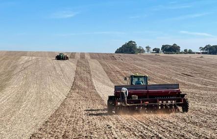Custo do trigo tem alta de 31%, mas relação de troca é favorável