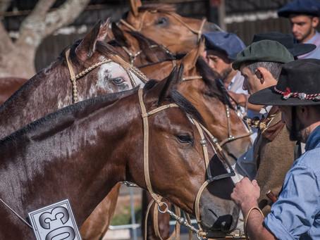 Ciclo de Exposições Passaporte do Cavalo Crioulo apresenta recordes
