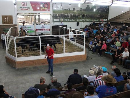 Eventos destacam potencial da bubalinocultura no Rio Grande do Sul