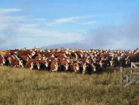 Guatambu é destaque no Programa de Avaliação à Campo da ABHB