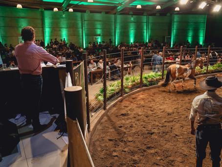Demanda por cavalos de pelagem manchada cresce no Brasil