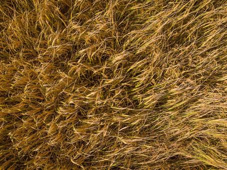 Prorrogação de alíquota zero do IOF reduz custos para o produtor rural