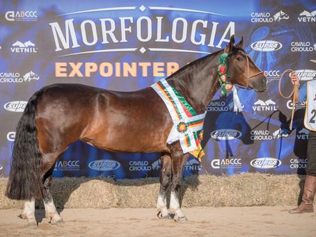 Melhor exemplar da raça Crioula do ciclo é égua de Uruguaiana
