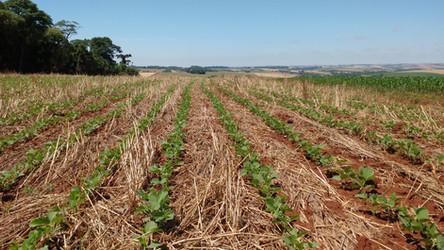 Área plantada de soja na região da Cotrisoja já chega a 95%