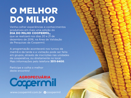 Coopermil realizará dias de campo da cultura do milho