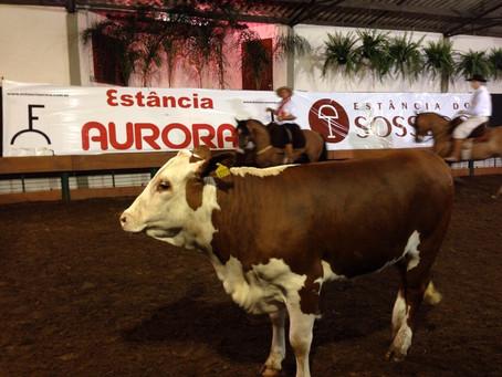 Leilão Aurora e Sossego chega a R$ 1,1 milhão de faturamento