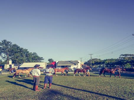 Avaré recebe etapa da Exposição Passaporte do Cavalo Crioulo