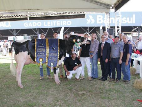 Vaca de Humaitá é exemplo morfológico da raça holandesa