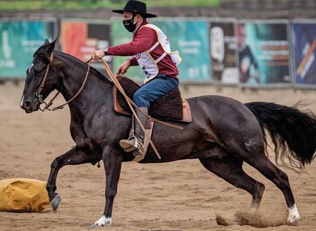 Leilão Santa Angélica, Maufer e Convidados traz uma oferta qualificada na raça Crioula
