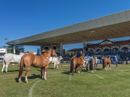 Exposição em Uberaba marca abertura de novo mercado para o cavalo Crioulo
