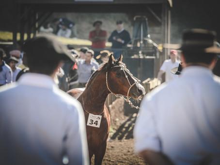 Chapecó recebe etapa de Exposição Passaporte do Cavalo Crioulo