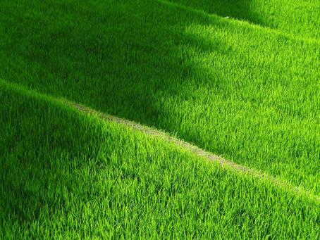 Federarroz alerta produtores sobre o Cadastro Ambiental Rural