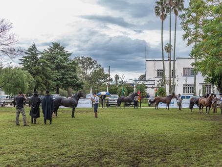 Ciclo de Exposições Passaporte do Cavalo Crioulo chega à Bagé