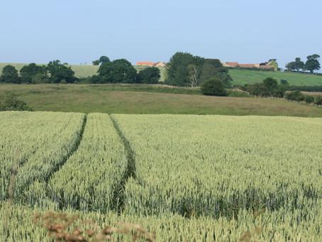 Consultoria prevê área estável para a safra de grãos 2014/2015