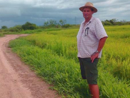 RiceTec lança projeto de 15 mil quilos por hectare nas lavouras de arroz