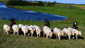 Leilão da Santo Izidro retorna ofertando reprodutores Angus e Charolês