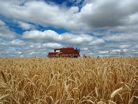 Decisão sobre TEC do trigo deve reduzir margem do produtor