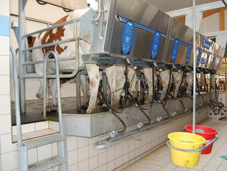 Simvet realiza curso para RTs sobre produtos de origem animal