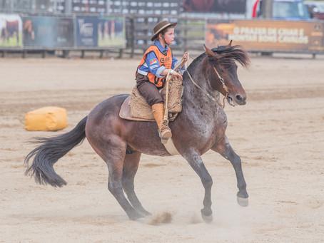 Freio Jovem encerra programação do Cavalo Crioulo na Expointer