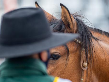 Calendário de provas do Cavalo Crioulo é adaptado para integrar a Expointer