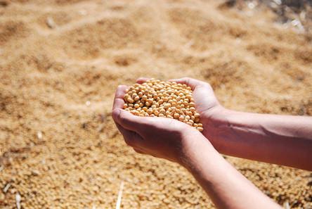 Cooperativas devem receber metade da soja colhida no Rio Grande do Sul
