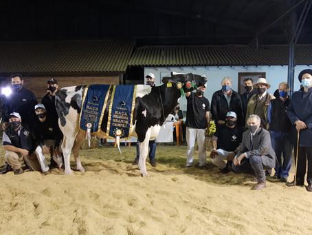Grande campeonato da raça Holandesa na Expointer Digital vai para Salvador do Sul