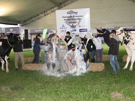 Produtor de Carlos Barbosa arremata títulos do Concurso Leiteiro da raça Holandesa