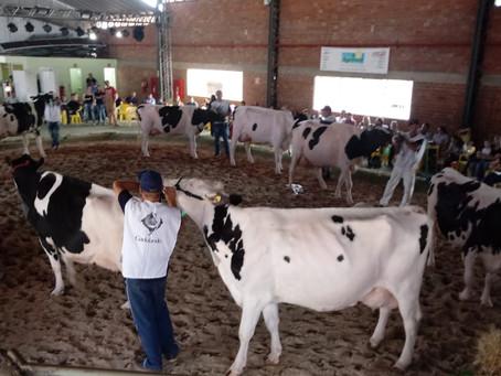 Julgamento da raça Holandesa em Ijuí premia expositor do município