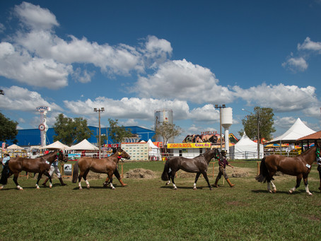 Cavalo Crioulo tem crescimento de 8% em Mato Grosso