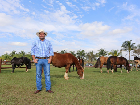 Cresce o interesse pela criação do cavalo Crioulo em Minas Gerais
