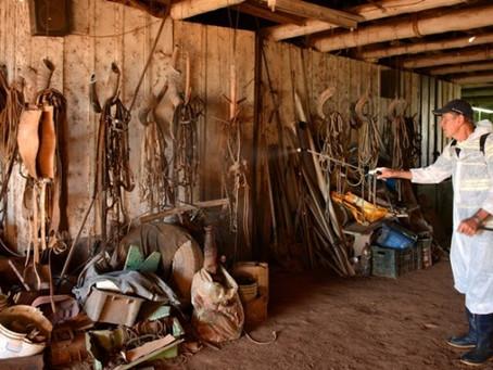 Veterinários reforçam cuidados no tratamento do Mormo