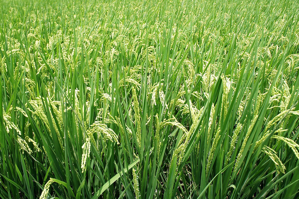 plant-671086_1280.jpg