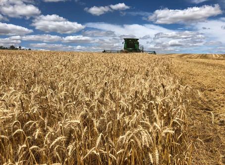 Cooperativas agropecuárias gaúchas esperam por juros menores no Plano Safra