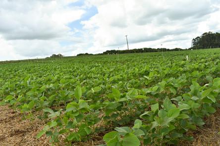 RTC finaliza segunda rodada de avaliação de experimentos que testam a seletividade de herbicidas