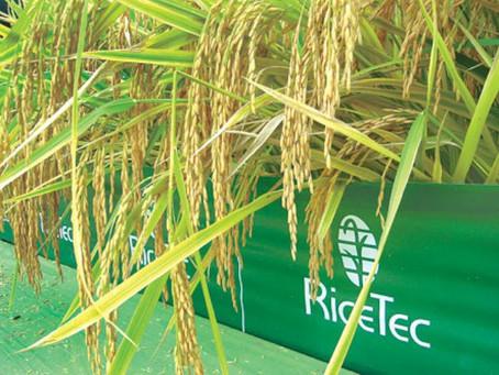 RiceTec amplia investimentos e inaugura nova sede no Uruguai