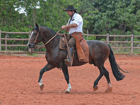 Brasil Central se destaca na compra de Cavalos Crioulos em leilão virtual