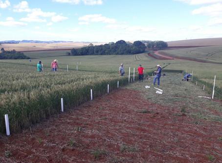 Nutrição do solo será destaque em Dia de Campo em Erechim