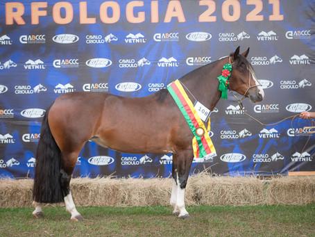 Ourinhos carimba passaporteados para Morfologia do Cavalo Crioulo