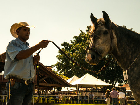 Mercado do cavalo Crioulo tem crescimento em Mato Grosso