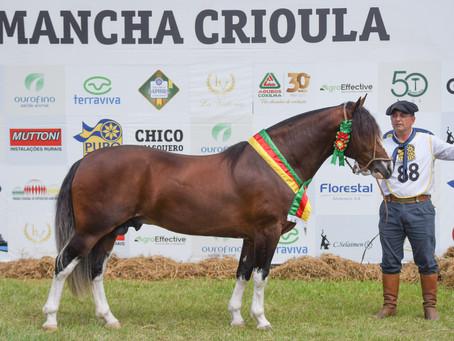 Cavalo de Dom Pedrito é o melhor exemplar do Mancha Crioula