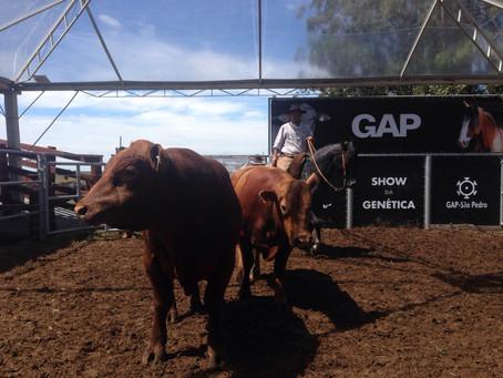 Primavera supera expectativa de crescimento na venda de gado