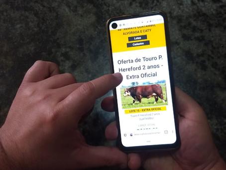 Índices genéticos auxiliam comprador de touros na tomada de decisão
