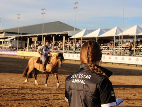 Criadores de cavalos Crioulos irão acompanhar exame de admissão do The Best Jump